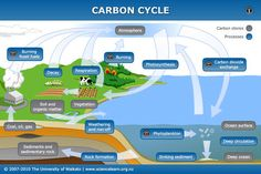 INFO SHEET - Carbon cycle - As a component of various compounds, carbon cycles between the atmosphere, oceans and living organisms, through the combined processes of photosynthesis, decomposition and respiration. 8th Grade Science, Middle School Science, Science Classroom, Science Education, Physical Science, Science Lessons, Life Science, Science Experiments, Environmental Engineering