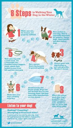 Walk your dog in the Winter? Your dog walking is a great benefit. Make sure you both our equipped for the weather. Dog Care Tips, Pet Care, Pet Tips, Puppy Care, Baby Tips, Puppy Training Tips, Safety Training, Training Schedule, Training Dogs