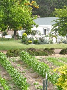Susan Branch garden inspiration