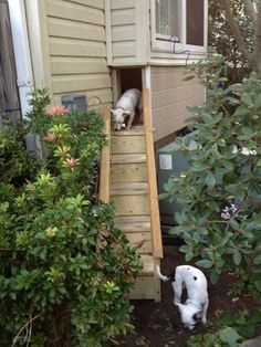 So, these little dogs have built in crates under the window seats and mom lifts up the outdoor hatch so their crate actually extends to a playground of sorts. LOVE!!