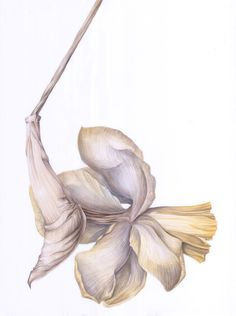 Yellow narcisus faded detail, in watercolor Watercolor, Detail, Yellow, Spring, Illustration, Design, Art, Pen And Wash, Art Background