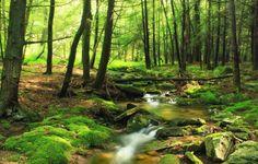 metsä kuvia, joki taustakuvia, luontokuvia, kivet taustat