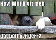 funny german shepherd pics | Hotdog - german shepherd - Page 30 - Loldogs n Cute Puppies - funny ...