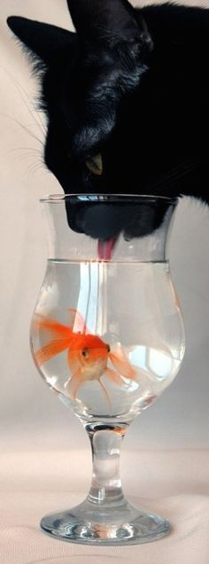 Careful Little Fish
