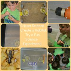 Capri + 3: Create a Cricket Habitat and Do a Fun Science Experiment #playfulpreschool