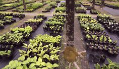 Fernwood Nursery & Gardens in Montville owned by Denise and Rick Sawyer. They offer a wide variety of shade tolerant ornamental plants. Rick Sawyer started the nursery in 1990.