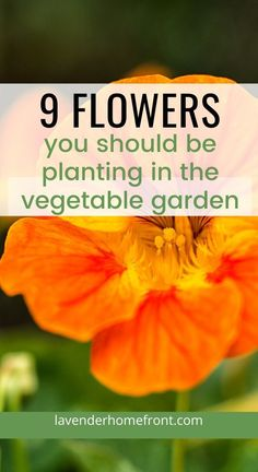 9 Flowers to Grow in Your Vegetable Garden Learn the basics of companion planting with these 9 flowers that should be added to your vegetable garden. Grow healthier vegetables by adding flowers. Planting Vegetables, Growing Vegetables, Vegetable Companion Planting, Companion Gardening, Healthy Vegetables, Gardening For Beginners, Gardening Tips, Arizona Gardening, Gardening Services