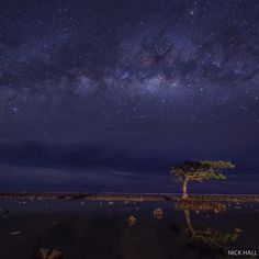 A view of the inner reef with a lone mangrove tree interrupting the horizon with the night sky and milky-way above. Blurry lights of foragers looking for shellfish using torches and flashlights can be faintly seen in the background near the village of Utwe, Kosrae island, Micronesia. On this island, indigenous landowners are using the region's first conservation easement to protect a rare ecosystem. They worked with the Conservancy to establish an income-generating easement—@nickhallphoto…