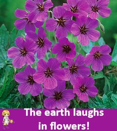 The earth laughs in flowers! http://thegardeningcook.com/inspirational-flower-photos/