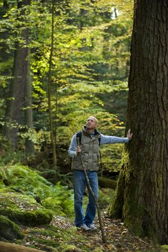 PA~The tallest trees in the Eastern United States can be found in Cook Forest State Park.