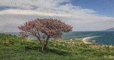 جزيرة تشارباناك التركية طبيعة خلابة تسحر الناظرين