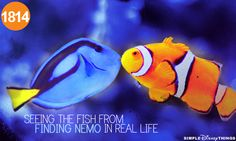 1814. Seeing the fish from finding nemo in real life.. FINDING NEMO!!! :D