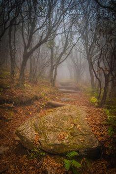 Beautiful Nature (disminucion: Magical Path)