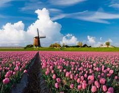 Netherlands - soooo beautiful!