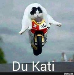 World Superbike Meow Championship Winner. cat recipes monty the cat cats things cat base awesome cats cat and dog lost cat cat craft funny kitty cats cat tutorial guilty dogs laughing cat cat stuff furniture cat home ideas sheep cat Tierischer Humor, Bike Humor, Motorcycle Humor, Man Humor, Funny Shit, Funny Cute, Funny Stuff, Funny Animal Pictures, Funny Photos
