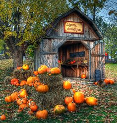 A Shed IN The Fall