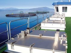 That one view of an aquaculture establishment