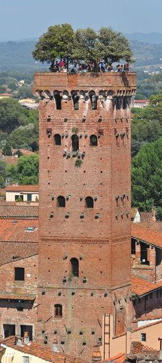 The city of Lucca in Tuscany, Italy, is famous for its medieval architecture and intact city walls.  Yet among all of its exquisite buildings one stands out. The Torre Guinigi or Guinigi Tower in English, towers over the city.