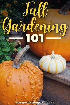 Do you love gardening, but stop when summer is over? Then read Fall Gardening 101 to learn how to plant, grow, care, and harvest vegetables during autumn. You'll love how easy and quick these plants are to grow! #Fall #Gardening #Vegetables Starting A Vegetable Garden, Vegetable Garden For Beginners, Gardening For Beginners, Gardening Tips, Gardening Vegetables, Growing Vegetables, Garden Plants, Indoor Plants, Autumn Garden