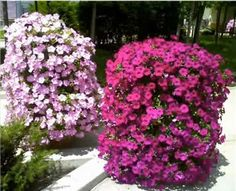 Build your own Petunia Tower.  Step-by-step video instructions on how to easily create these magnificent flower towers.