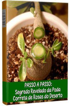 Email – m candida z diuri diuri – Outlook Cacti And Succulents, Planting Succulents, Potted Plants, Cactus Plants, Desert Rose Plant, Plantas Bonsai, Bonsai Art, Orchid Care, Exotic Plants