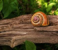 caracol..col