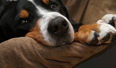 Nettoyer les poils de chiens dans la maison, pas toujours facile. Voici nos 10 trucs pour bien enlever tous les poils du chien.