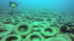 Up to two million tires, bundled by metal clips, were dumped to create an artificial reef; but now they're damaging it