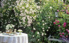 flores para jardim ano todo:Na hora de escolher as plantas para jardim de inverno, prefira as