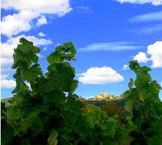 'Vino y tradición' premio 'los colores de Monterrei' » http://www.vinetur.com/2013011811159/vino-y-tradicion-premio-los-colores-de-monterrei.html