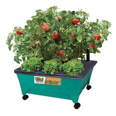 Little Pickers 24-1/2 in. x 20-1/8 in. Patio Garden Kit with Watering System and Casters, Kid-Themed
