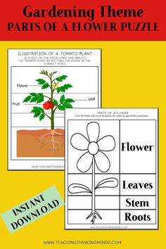 Garden Theme Activity Bundle - Teaching Thinking Minds Emergent Literacy, Literacy Worksheets, Parts Of A Flower, Critical Thinking Skills, Gross Motor Skills, Garden Theme, Dramatic Play, Life Cycles