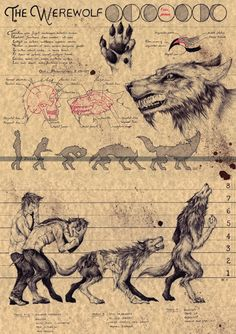 the Werewolf Ink on colored paper x Folklore Art, Art Prints, Legends And Myths, Creature Art, Lycanthrope, Art, Fantastic Beasts, Werewolf Art, Mythical Creatures Art