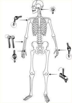 Natuurinformatie - Stijf en soepel: over botten en gewrichten