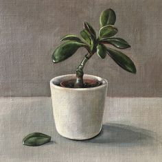 A small but perfectly formed still life study framed and ready to plant on your wall! 'Jade Plant' 20 x 20 Oil on Linen 🌱🌵 Plant Painting, Plant Art, Poster Color Painting, A Level Art Sketchbook, Fantasy Art Landscapes, Jade Plants, Floral Artwork, Botanical Art, New Art