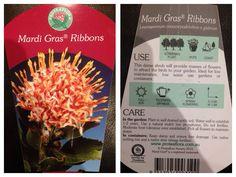 Mardi Gras ribbons