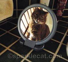 Why is that awful Mirror Kitty hanging around?