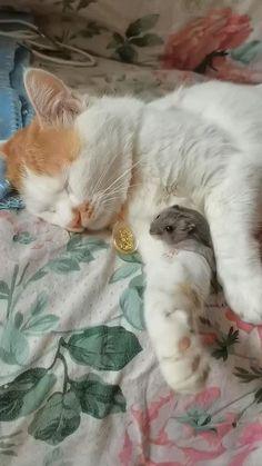 Super Cute Animals, Cute Little Animals, Cute Funny Animals, Funny Cats, Cute Cats And Kittens, Kittens Cutest, Animal Antics, Cute Animal Videos, Cute Creatures