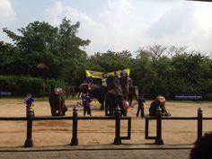 Elephant Show in Bangkok