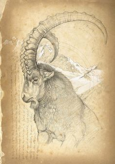 by Marcello Pettineo Animal Sketches, Animal Drawings, Art Sketches, Art Drawings, Horse Drawings, Pencil Drawings, Art And Illustration, Natur Tattoos, Art Du Croquis