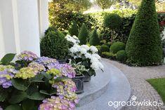 Ogród nie tylko bukszpanowy - część I - Forum ogrodnicze - Ogrodowisko