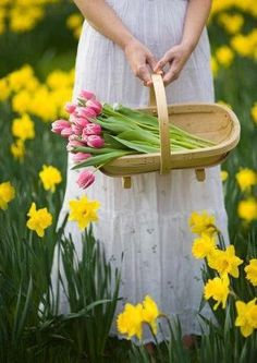 Tulips and daffodils are great to cut for fresh floral arrangements.