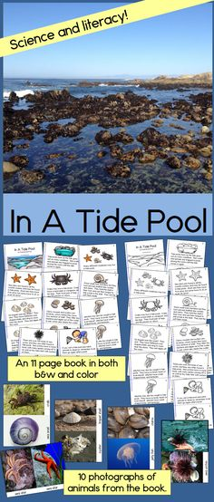 Combine science and reading as you learn about many of the animals that live in tide pools and the ocean!  Love the amazing photos! TpT$