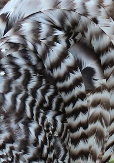 tail feathers by Jane Inman Stormer, via Flickr