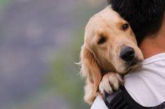 Voici 10 raisons pour lesquelles votre chien est très important pour vous! - Trop Cute et mignon