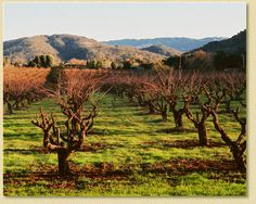Sycamore Creek Vineyards - not across the street from the high school, but still pretty convenient and close to town in Uvas Valley!