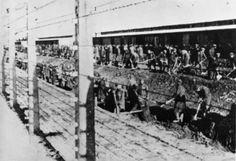 Digging ditches (Auschwitz-Birkenau State Museum Archives)