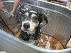 Self Serve Dog Wash Sacramento Splash Hound USA - How it Works