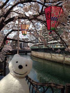 クマ散歩:大岡川を品行方正なクマが上る3 (福富町) The Bear took a walk up the Ooka River!♪☆(^O^)/