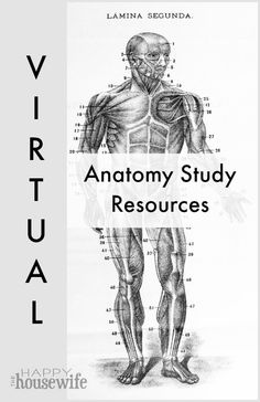 Thanks to new virtual anatomy resources, we can turn our computers into science labs and explore the world of anatomy and physiology. Here are some of my favorite virtual tools for studying anatomy. | The Happy Housewife